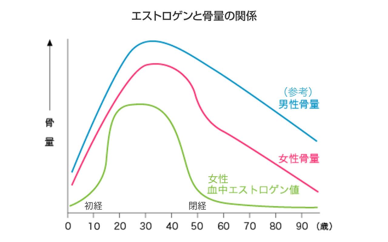 エストロゲンと骨量の関係 図